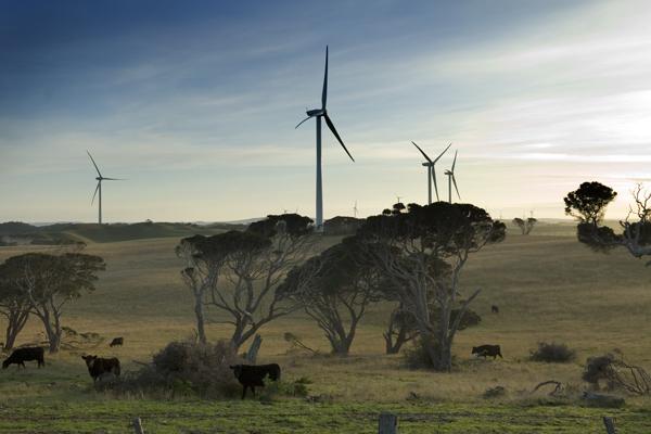 Cape Bridgewater wind farm