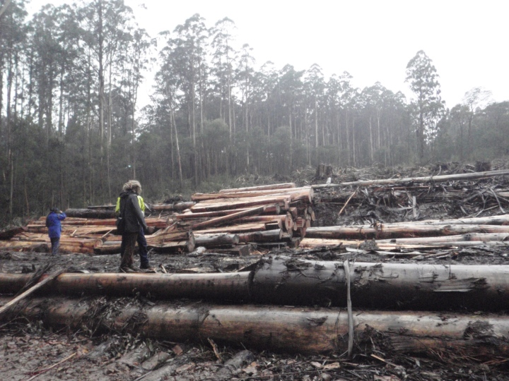Gunbarrel Coupe at Sylvia Creek, being logged 2011