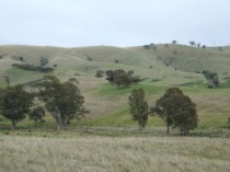 Infigen Energy are seeking approval to build 16 wind turbines atop Cherry Tree Hill in Trawool, Victoria.