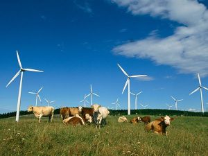 Cattle under wind turbines in Canada. Image courtesy of http://news.nationalgeographic.com/news/2009/09/090904-farm-energy/
