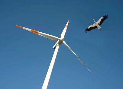 turbine bird